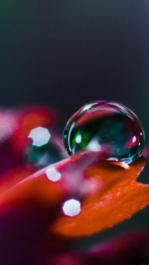 Wallpaper Raindrops Nature Bokeh iPhone 7 wallpaper