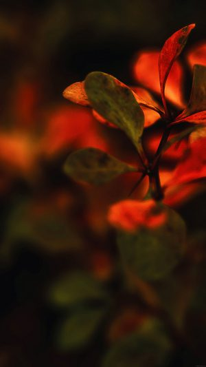 Wallpaper Red Flowers Nature iPhone 7 wallpaper