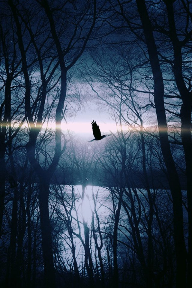 Wood Night Dark Nature Bird Fly Lake iPhone wallpaper