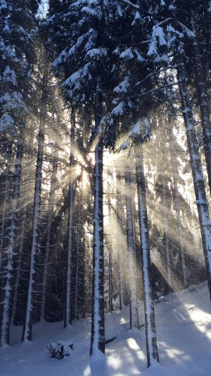 Wood Snow Winter Light Sun Nature iPhone 7 wallpaper