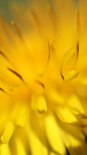 Yellow Flower Zoom Nature iPhone 7 wallpaper