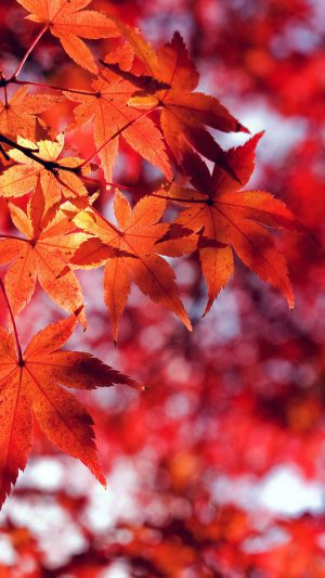 Fall Leaf Red Mountain Bokeh iPhone 7 wallpaper