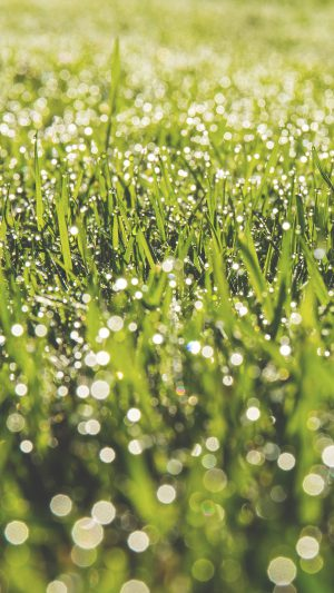 Lawn Green Spring Bokeh Light iPhone 7 wallpaper