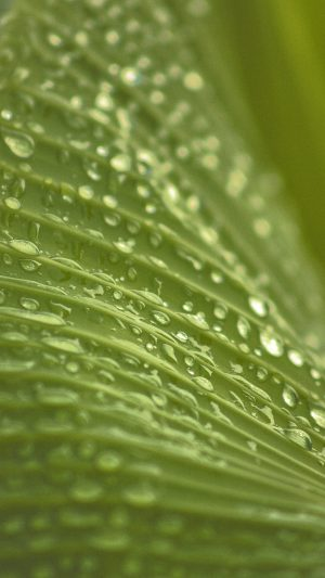 Leaf Rain Summer Green Bokeh iPhone 7 wallpaper