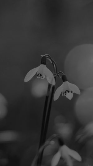 Uknown Flower Blue Bokeh Flare Dark Black Bw iPhone 7 wallpaper