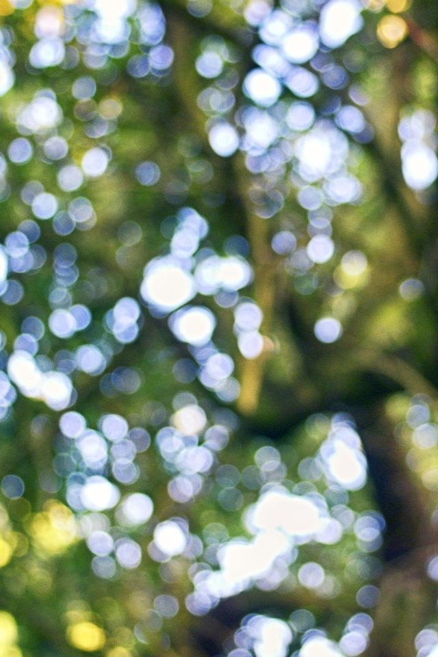 Wallpaper Tree Bokeh Leaf Mountain iPhone wallpaper