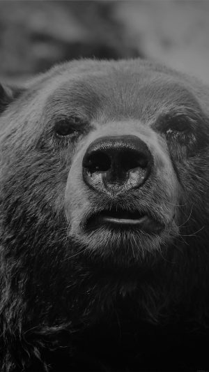 Bear Face What The Hell Nature Bw Dark Animal iPhone 7 wallpaper