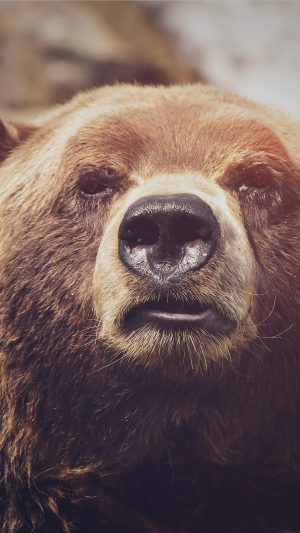 Bear Face What The Hell Nature Flare Animal iPhone 7 wallpaper
