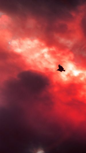 Bird Fly Sky Clouds Red Sunset Fire Nature Animal iPhone 7 wallpaper