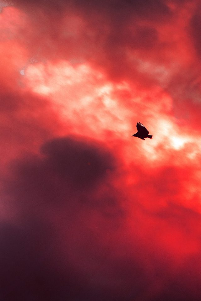 Bird Fly Sky Clouds Red Sunset Fire Nature Animal iPhone wallpaper