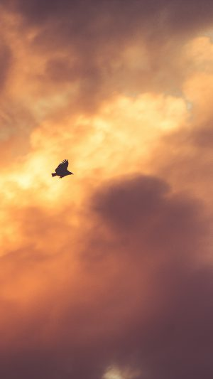 Bird Fly Sky Clouds Red Sunset Nature Animal iPhone 7 wallpaper