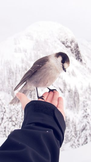 Bird In My Hand Snow Winter Cold Animal iPhone 7 wallpaper