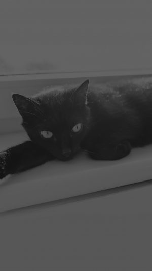 Black Cat Animal Cute Watching Dark Bw iPhone 7 wallpaper