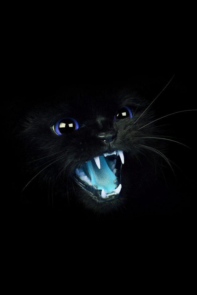 Black Cat Blue Eye Roar Animal Cute IPhone Wallpaper