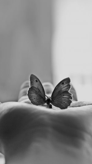 Butterfly Love In Hand Animal Bw iPhone 7 wallpaper