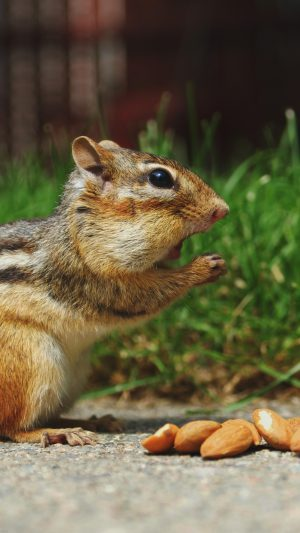 Chipmunk Eating Surprised Nature Animal iPhone 7 wallpaper