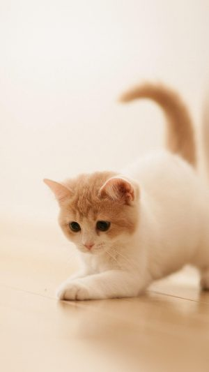 Cute Cat Kitten Animal iPhone 7 wallpaper