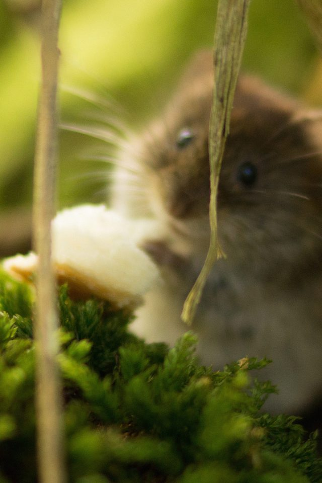 Cute Mouse Animal Nature iPhone wallpaper