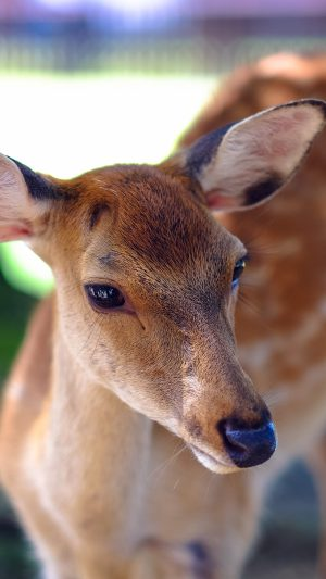 Deer Cute Animal Soft Nature iPhone 7 wallpaper