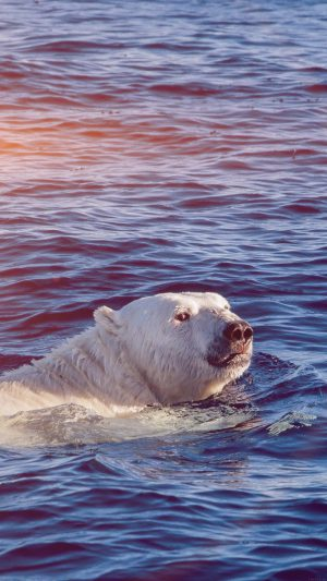 Dont Watch Me Swim Polar Bear Sea Animal Flare iPhone 7 wallpaper