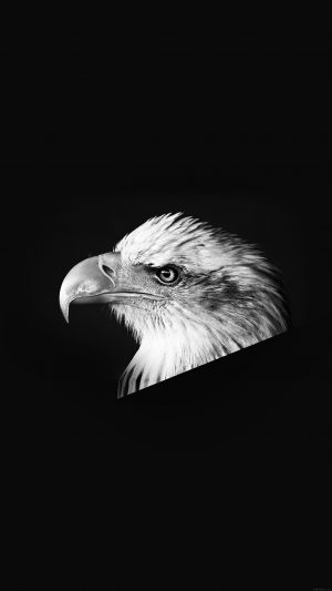 Eagle Dark Animal Bird Face Bw iPhone 7 wallpaper