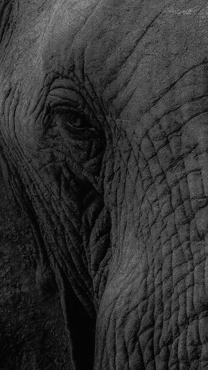 Elephant Eye Animal Nature iPhone 7 wallpaper