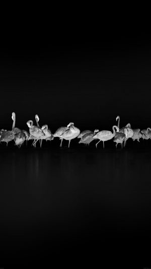 Flamingos Black Peace Animal Nature Birds iPhone 7 wallpaper