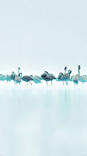 Flamingos Blue Peace Animal Nature Birds iPhone 7 wallpaper