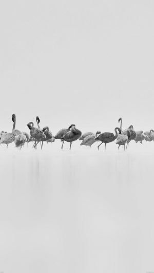 Flamingos White Peace Animal Nature Birds iPhone 7 wallpaper