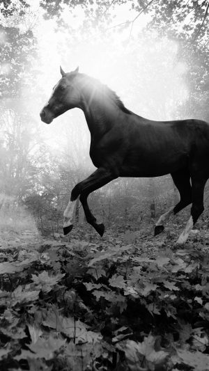 Horse Art Animal Fall Leaf Mountain Flare Dark Bw iPhone 7 wallpaper