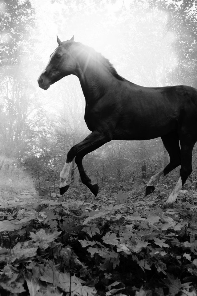 Horse Art Animal Fall Leaf Mountain Flare Dark Bw Iphone 7