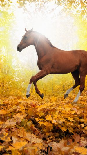Horse Art Animal Fall Leaf Mountain Red iPhone 7 wallpaper