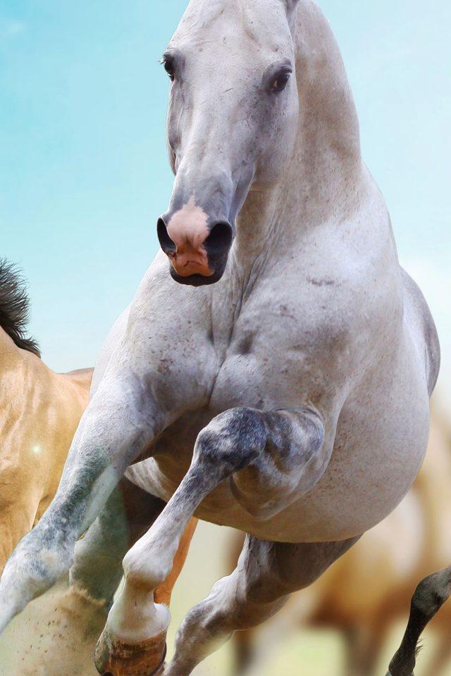 Horses Run Animal Iphone 7 Wallpaper Iphone7wallpapers Co