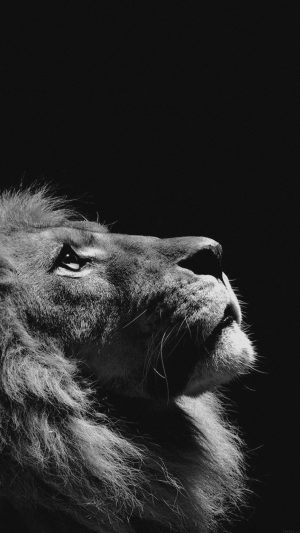 Lion Looking Sky Animal Nature Dark Photo iPhone 7 wallpaper