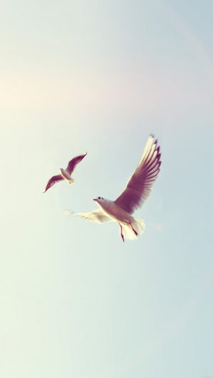 Pigeons Bird Fly Sky Animal Nature Minimal Flare iPhone 7 wallpaper