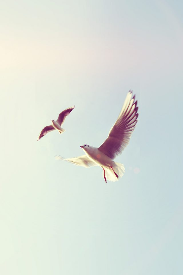 Pigeons Bird Fly Sky Animal Nature Minimal Flare iPhone wallpaper