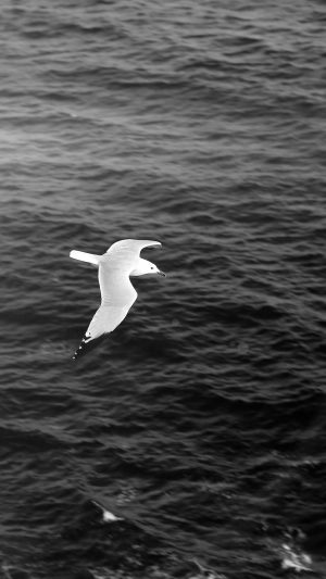 Seagull Bird Sea Ocean Animal Nature Dark iPhone 7 wallpaper