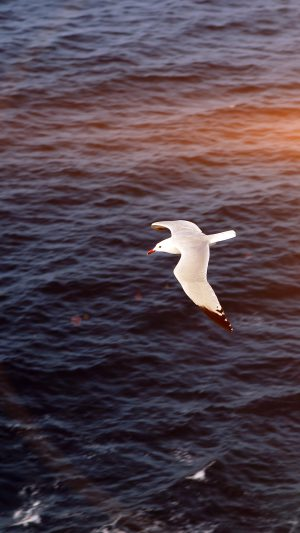 Seagull Bird Sea Ocean Animal Nature Flare iPhone 7 wallpaper