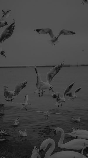 Seagull Sea Beach Port Black Nature Animal iPhone 7 wallpaper