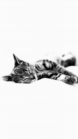 Sleepy Cat Kitten White Animal iPhone 7 wallpaper