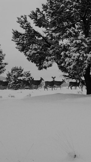 Snow Deer Winter Nature Animals iPhone 7 wallpaper