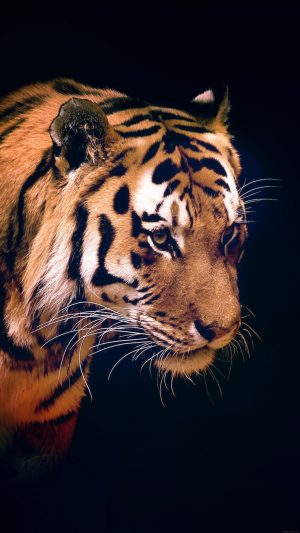 Tiger Dark Animal Love Nature iPhone 7 wallpaper