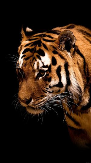 Tiger Jk Dark Animal Love Nature iPhone 7 wallpaper
