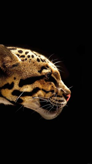 Wallpaper Wild Cat B Animal iPhone 7 wallpaper